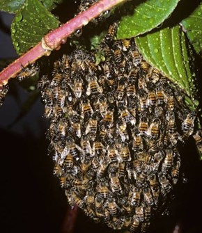 Two Men Peed on a Bee's Nest in Vietnam, the Bees Sting Where the Sun Doesn't Shine