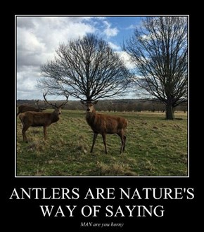 ANTLERS ARE NATURE'S WAY OF SAYING