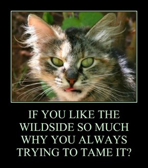 IF YOU LIKE THE WILDSIDE SO MUCH WHY YOU ALWAYS TRYING TO TAME IT?