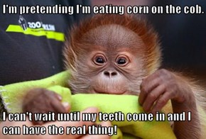 I'm pretending I'm eating corn on the cob.  I can't wait until my teeth come in and I can have the real thing!