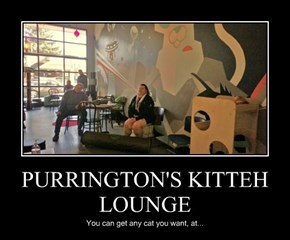 PURRINGTON'S KITTEH LOUNGE