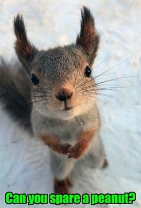 Can you spare a peanut?