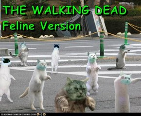 THE WALKING DEAD    Feline Version