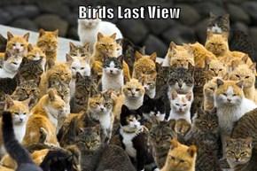 Birds Last View