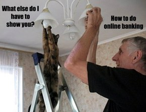 A Kitteh's Work is Never Done