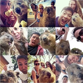 All the Quokka Selfies!