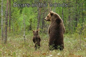 Bears in the woods...