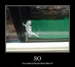 One Sexy Lizard