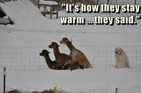 """""""It's how they stay                                        warm ... they said."""""""
