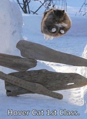 Hover Cat 1st Class.