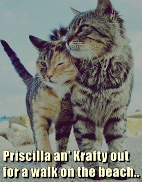 Priscilla an' Krafty out for a walk on the beach..