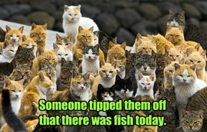 Someone tipped them off that there was fish today.