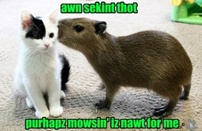 Rodentz'r Pritty Hyoog In Dis Nek Ob Teh Wudz
