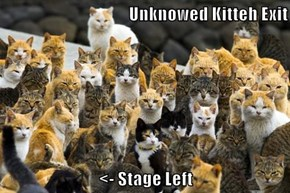 Unknowed Kitteh Exit  <- Stage Left