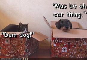 """Mus be ah                                                      cat thing.""                                                                          ""Dum dog!"""