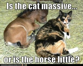 Is the cat massive...  or is the horse little?