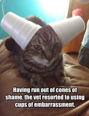 Having run out of cones of shame, the vet resorted to using cups of embarrassment.