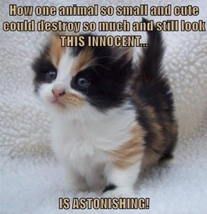How one animal so small and cute could destroy so much and still look THIS INNOCENT...  IS ASTONISHING!