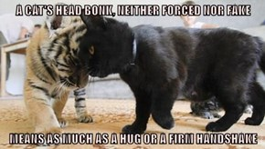 A CAT'S HEAD BONK, NEITHER FORCED NOR FAKE  MEANS AS MUCH AS A HUG OR A FIRM HANDSHAKE