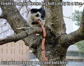 Mighty leopard keeps his kill safely in a tree  away from stoopy dogs and butchers
