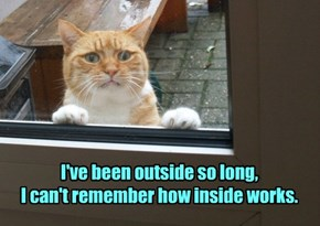 Scaredy cat.