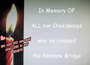 In Memory OF  ALL our Cheezpeeps  who've crossed  the Rainbow Bridge
