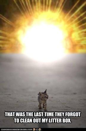 ONE EVIL CAT!