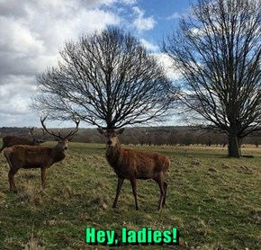 Lady Deers Objectify Me for My Rack