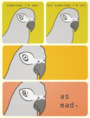 The Duality of Birds