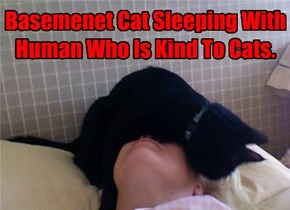 Basemenet Cat Sleeping With Human Who Is Kind To Cats.