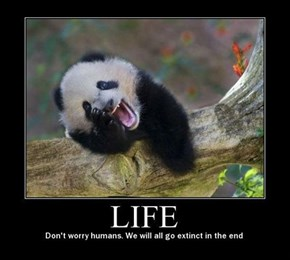 Pandas Are Cheery