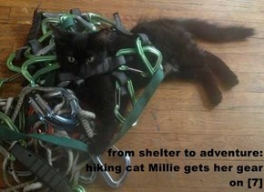 .                     from shelter to adventure:                   .                    hiking cat Millie gets her gear on [7]