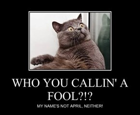 WHO YOU CALLIN' A FOOL?!?