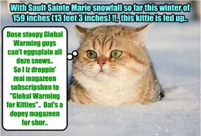 Smart kitties everywhere took careful note that the Winter of 2014 recorded more extreme snowfalls and cold temperatures..