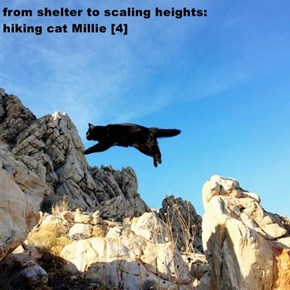 from shelter to scaling heights:                     hiking cat Millie [4]