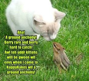 Aha! A ground anchoby! Berry rare and berry hard to catch! Awl teh uddr kittehs will be gween wif envy when I come to KuppyKakes wif a ground anchoby!