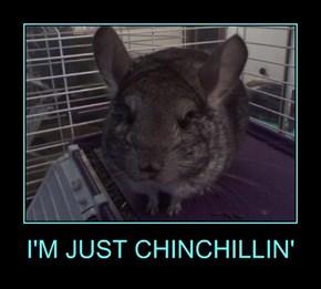 I'M JUST CHINCHILLIN'