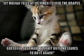 """""""MY HUMAN YELLS AT ME WHEN I CLIMB THE DRAPES ..  GUESS I'LL JUST HAVE TO WAIT UNTIL HE LEAVES                            TO DO IT AGAIN!"""""""