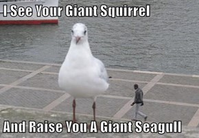 I See Your Giant Squirrel  And Raise You A Giant Seagull