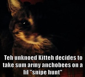 "Teh unknoed Kitteh decides to take sum army anchobees on a lil ""snipe hunt"""