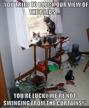 """""""YOU TRIED TO BLOCK OUR VIEW OF THE BIRDS ...  YOU'RE LUCKY WE'RE NOT SWINGING FROM THE CURTAINS!"""""""