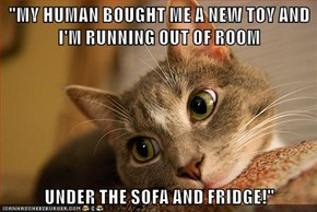 """""""MY HUMAN BOUGHT ME A NEW TOY AND I'M RUNNING OUT OF ROOM   UNDER THE SOFA AND FRIDGE!"""""""