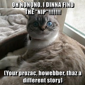 "OH NONONO, I DINNA FIND                  THE ""NIP""!!!!!!!  (Your prozac, howebber, thaz a different story)"