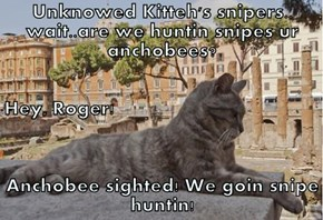 Unknowed Kitteh's snipers.. wait..are we huntin snipes ur anchobees? Hey, Roger! Anchobee sighted! We goin snipe huntin!