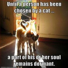 Until a person has been chosen by a cat ...  a part of his or her soul remains dormant.