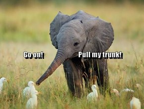 Go on!                           Pull my trunk!