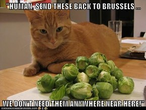 """""""HUMAN, SEND THESE BACK TO BRUSSELS ...  WE DON'T NEED THEM ANYWHERE NEAR HERE!"""""""