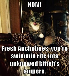 NOM!   Fresh Anchobees..you're swimmin rite inta unknowed kitteh's snipers.