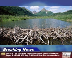 Breaking News - This Is A Live Feed From The BeaverDam On The Phantom River. Hopes Are That It Will Stop Or At Least Slow The Anchobee Army.