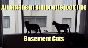 All kittehs in silhouette look like      Basement Cats